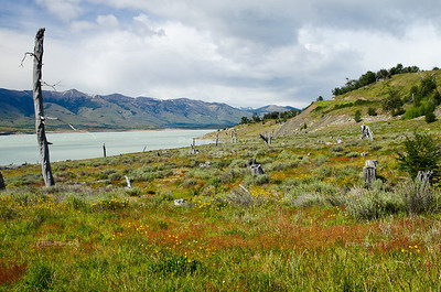 The shore of Roca Lake, the south arm of Lago Argentina in southern Patagonia, Argentina