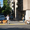 Dog walkers, Ayacucho Street, where I have a tiny little apt.