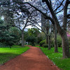 We stopped at the Botanical Gardens in Buenos Aires. This is an HDR photo of one of the trails.