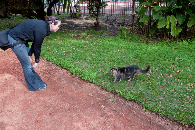 The park was abound with cats. This one wanted Sasha to play with her.