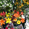 A shot of some colorful flowers. There were tons of flower stands along the streets of Buenos Aires.
