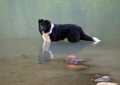 Mancha, the mercurial hiking dog, El Chalten, Argentina