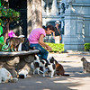 Recoleta Cementery. <br /> Ahhh, this is how they survive. Judging by the way they picked over their food, these cats must have a dozen people looking over them.