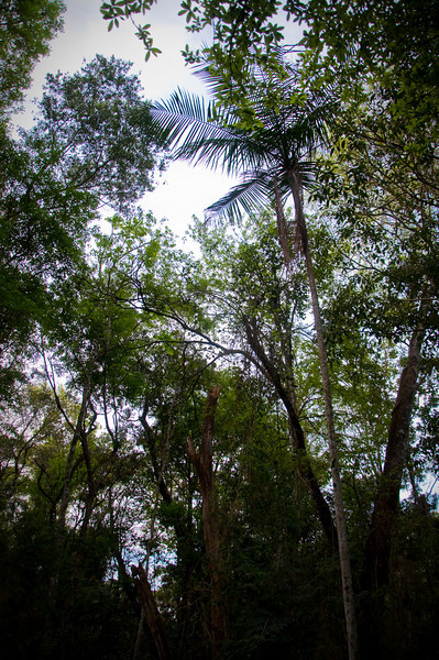 We took an ecological tour on a Jeep through the rainforest. This is looking up from the Jeep.
