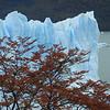 Fall, El Perito Moreno Glacier, Patagonia