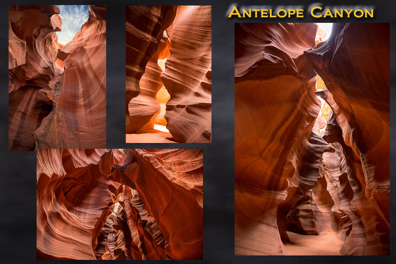 Antelope_Comp