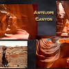 Antelope_Comp2