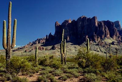 Saguaro cacti - near Phoenix, Arizona - 1987
