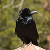 Edger Allen Crow