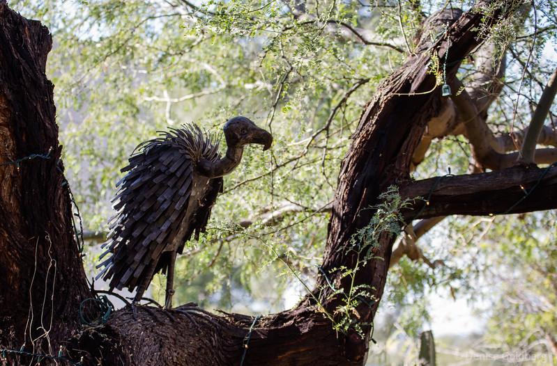 vulture sculpture, Tohono Chul Park
