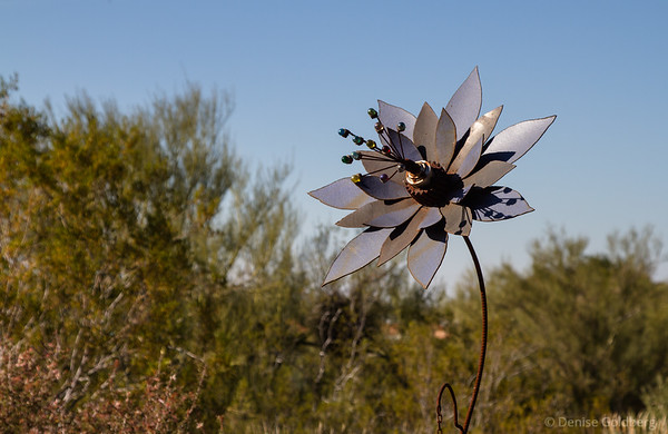 flower sculpture, Tohono Chul Park