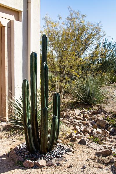 cactus sculpture, Tohono Chul Park