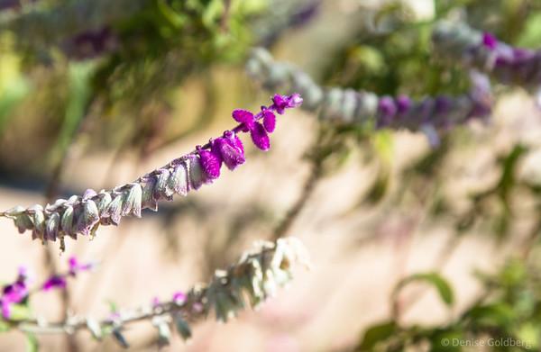 bright flowers, Tohono Chul Park