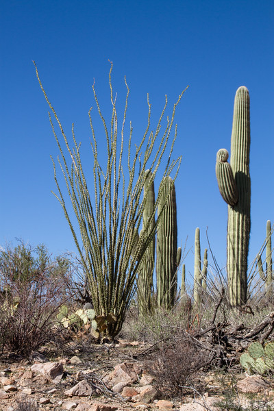 in the Tucson Mountain section of Saguaro National Park