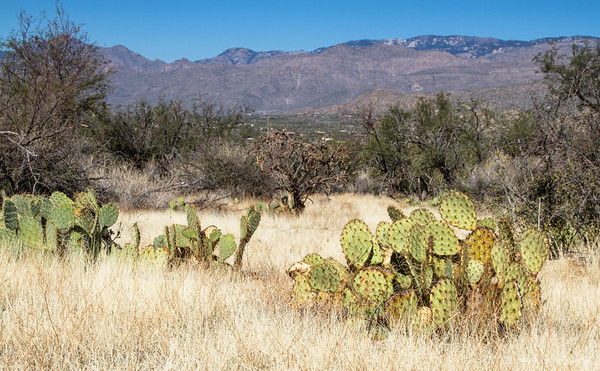 in the Rincon Mountain district of Saguaro National Park