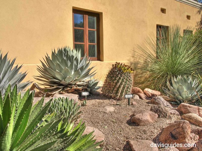 Tumacacori Mission cactus plants