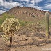 Saguaro cactus and other plants in Tucson Mountain Park