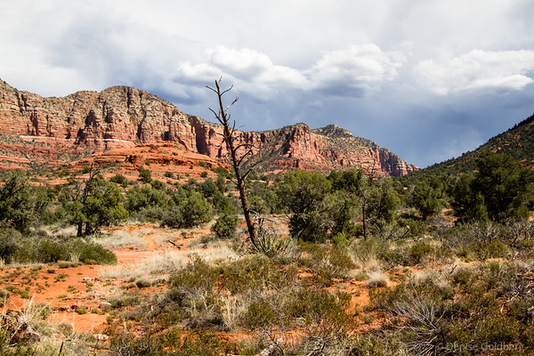 red rocks and trees under clouds