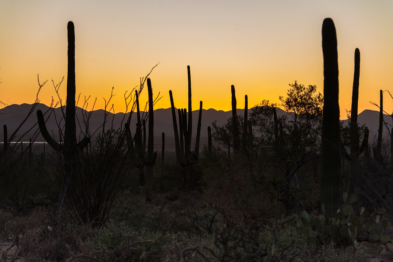 Low light at Saguaro National Park (West), AZ - December 2017