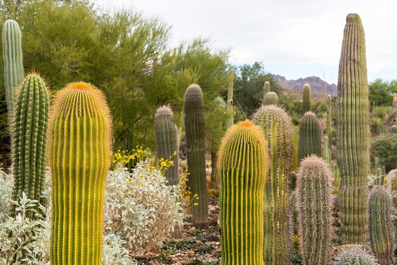 Arizona-Sonora Desert Museum, Tucson - December 2017