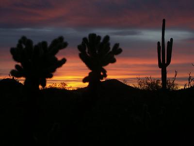 Arizona Dec '04