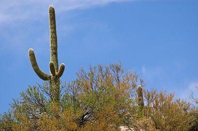 Arizona / New Mexico 2005