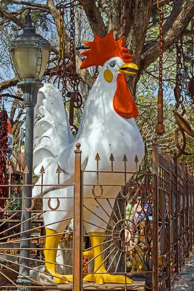 The Captured Rooster