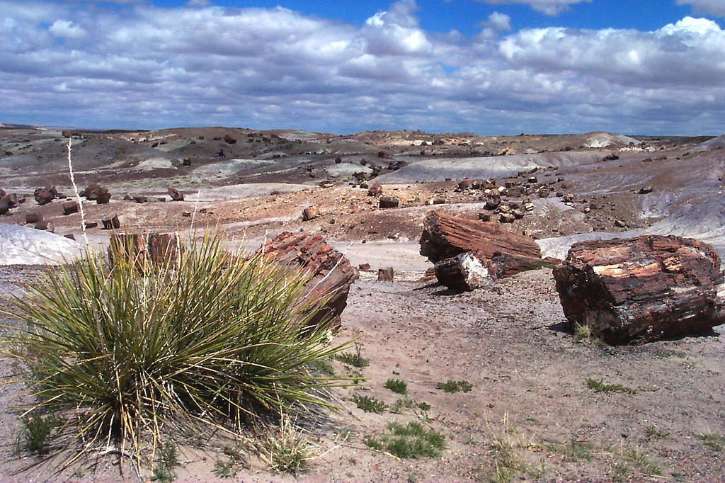 This is part of the Crystal Forest. The park has the largest known concentration of petrified wood in the world.