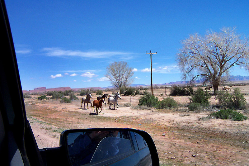 Back on the road heading north towards Monument Valley. There were a lot of animals running free along the highway. Besides these horses we saw cows, sheep, goats and a few dogs. (photo by Helen)