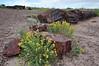 Petrified Forest, AZ, 7 September 2010.
