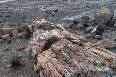 Petrified woods -- Petrifeid Forest NP