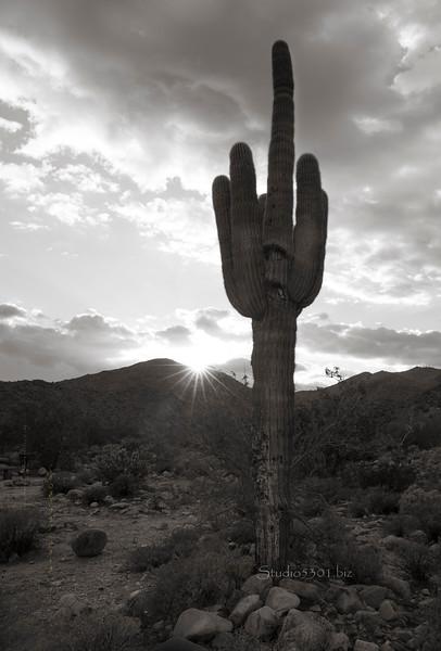 hand cactus B&W White Tank 6986