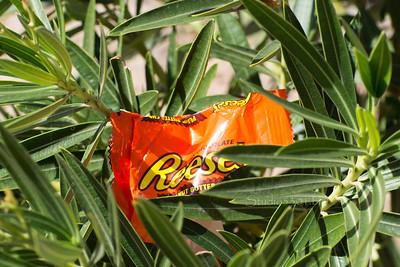 peanut butter tree 201