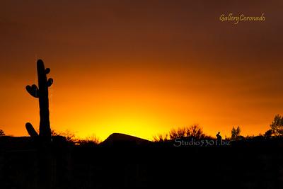 sunset  cactus silhouette rabbit 7479PatriciaLam