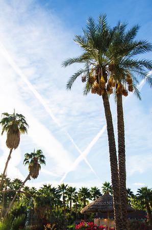 WLifeW palm sky cross 0198