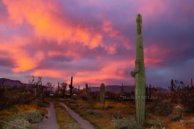 cactus road sunset caveck7503