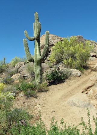 Arizona trail ride 2009