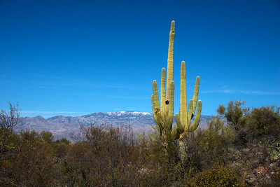 Arizona Travel Photography- Saguaro