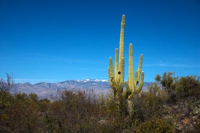 Arizona Travel Photography- Saguaro