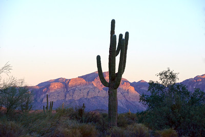 Arizona Travel Photography - Saguaro at Sunset