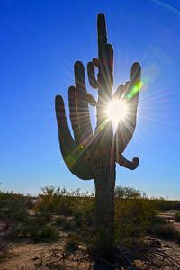 Arizona Travel Photography - Seguaro at Sunset