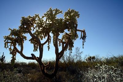 Arizona Travel Photography - Cactus