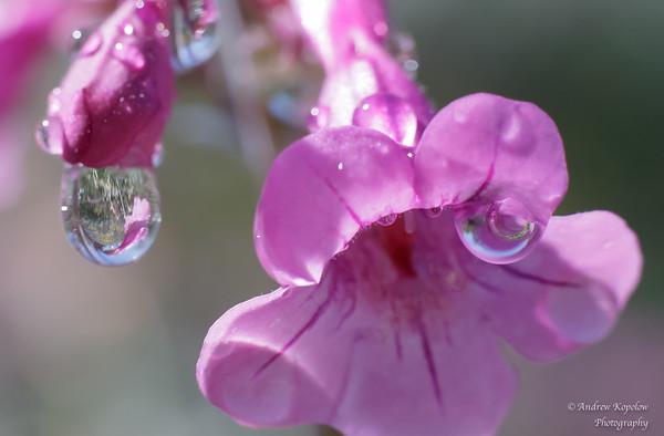 Water Drops at DBG