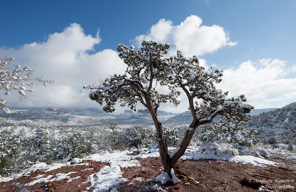 Sedona Snow, New Year's Day