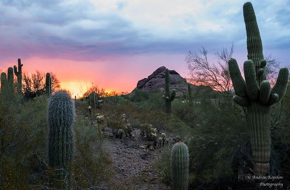 Sunset at Desert Botanical Garden