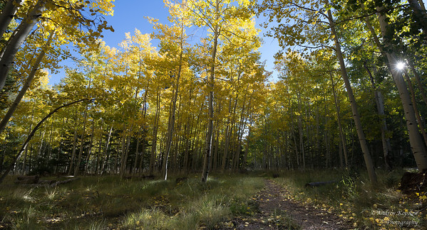 On The Trail, Locket Meadow