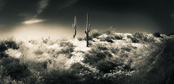 Dreamy Desert Landscape