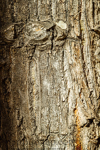 Detail of rough tree bark