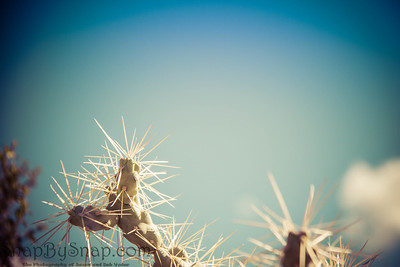 Cactus Plant with Blurred Background