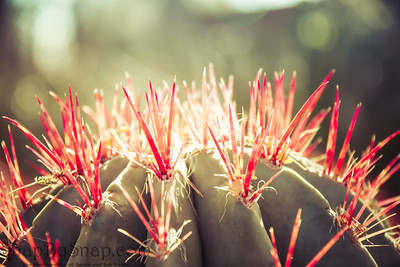 Cactus with Red Spikes